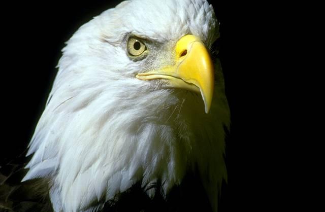 Are Eagles Nesting in Milton?