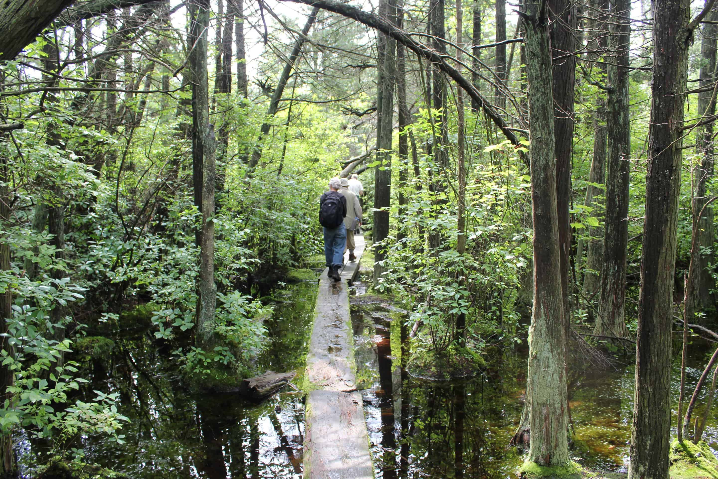 Friends of the Blue Hills New Member Walk and Guided Tour