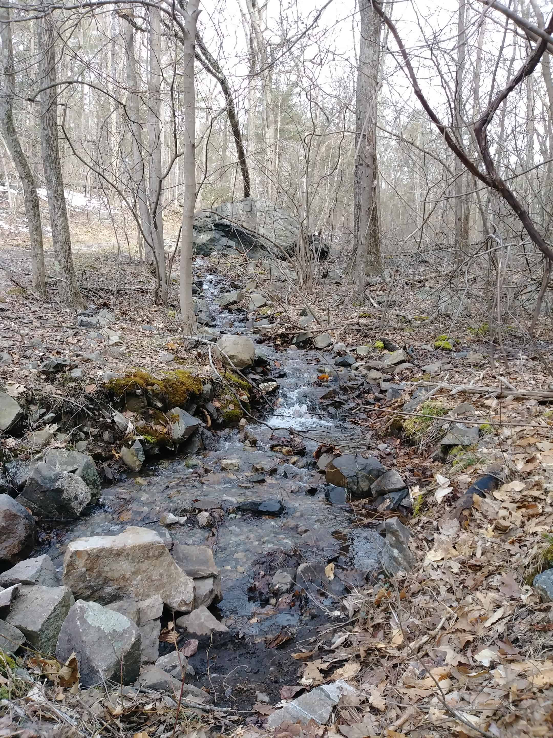 across from houghtons pond on green trail
