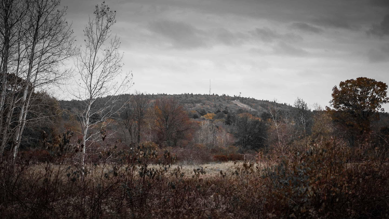 fowl meadow in the fall