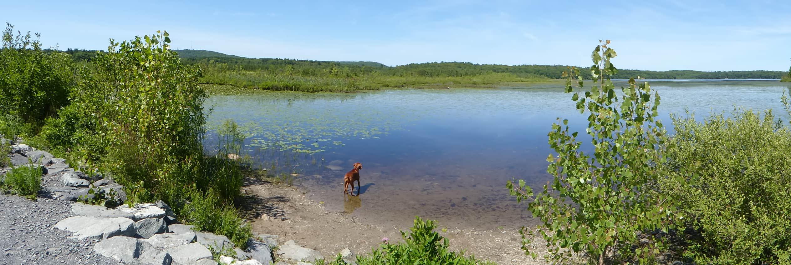 summer day at ponkapoag pond