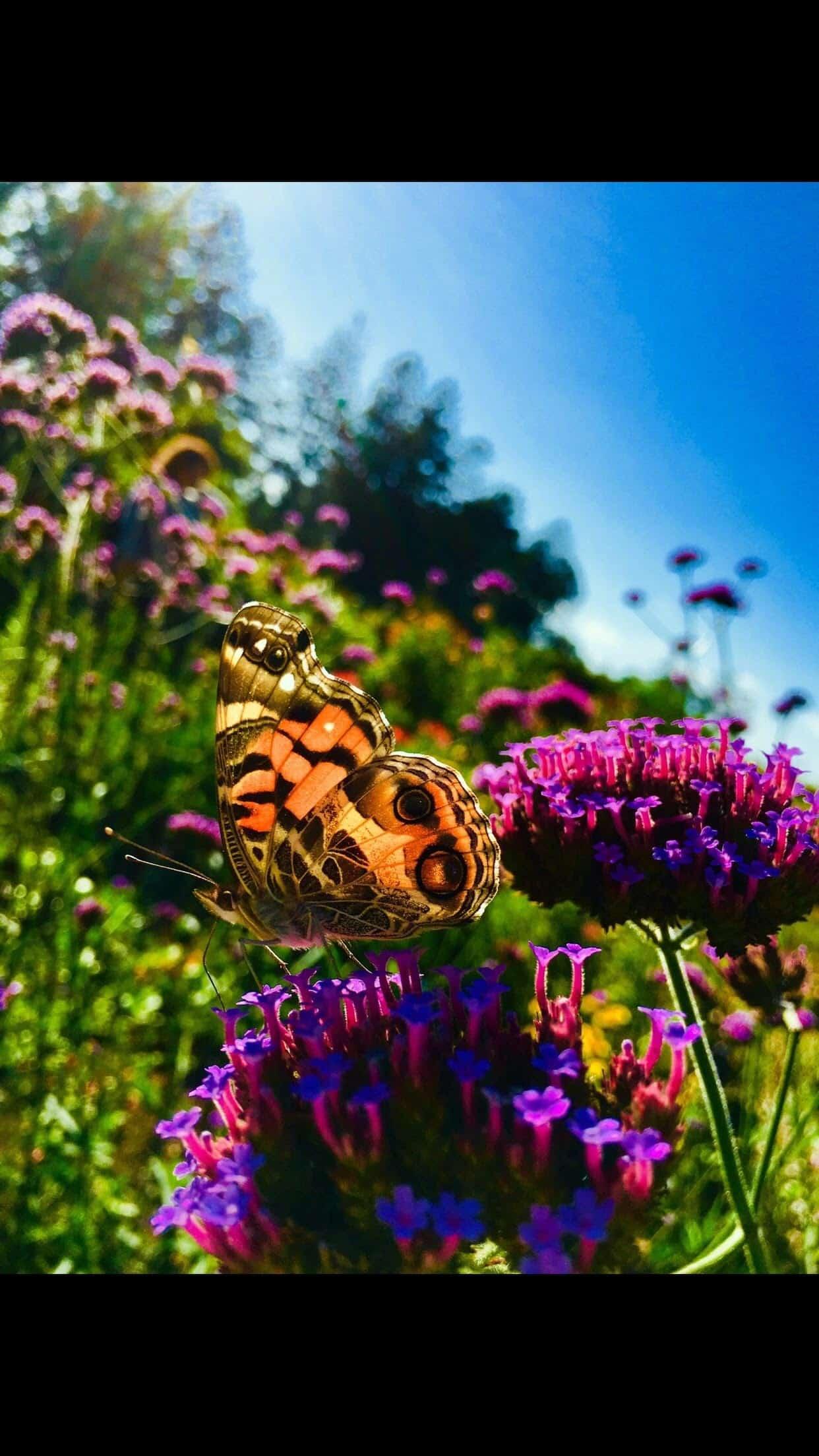 fly little butterfly