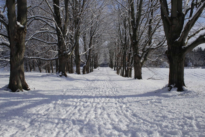 winter at maple lane