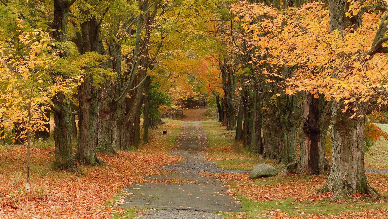 autumn at maple lane