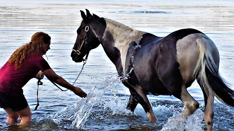 late summer horseplay at ponkapoag