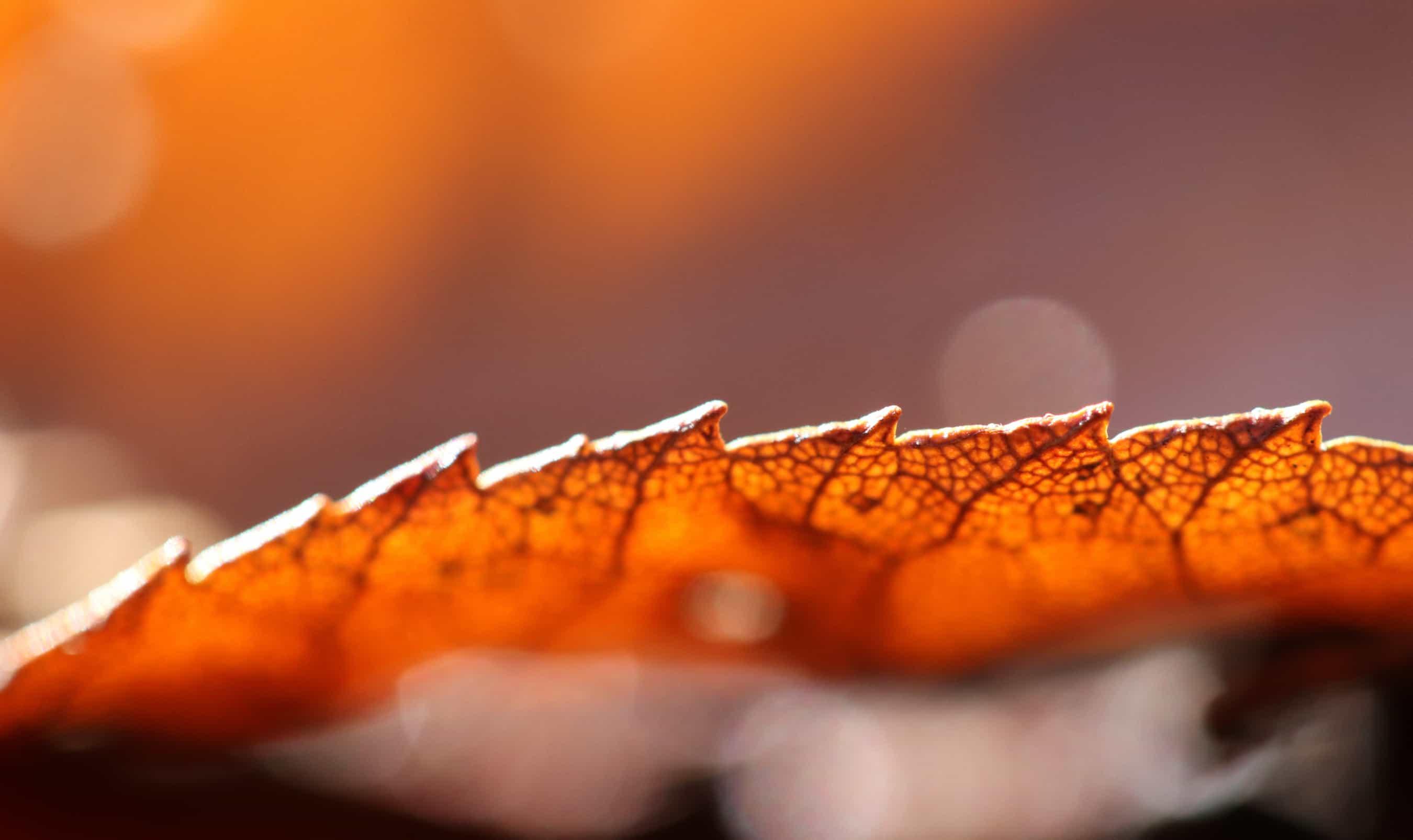 autumn veins