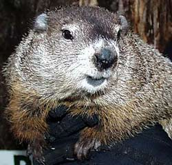 DCR Blue Hills Groundhog Day Wildlife Safari @ Brookwood Farm | Canton | Massachusetts | United States