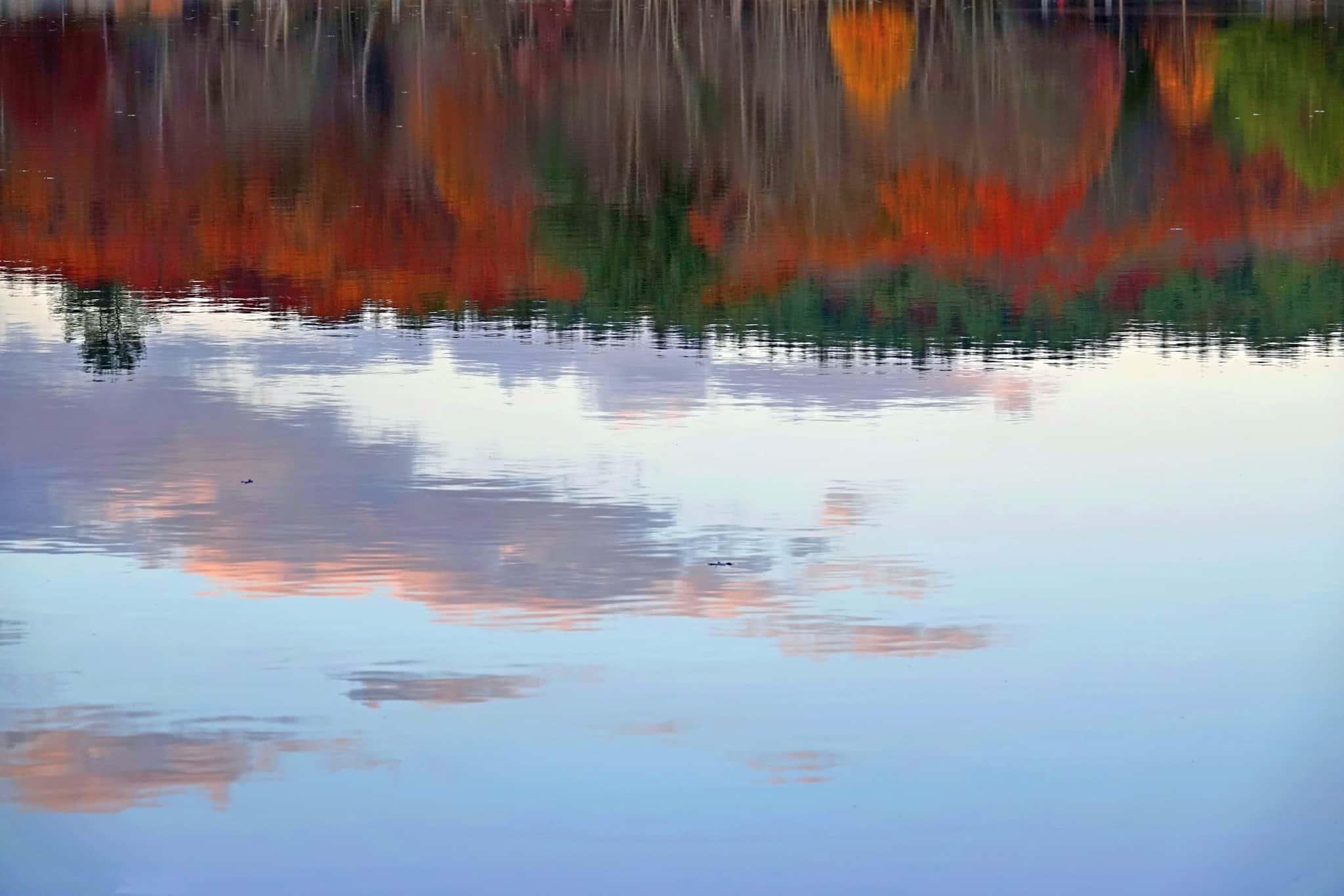 houghton pond reflection