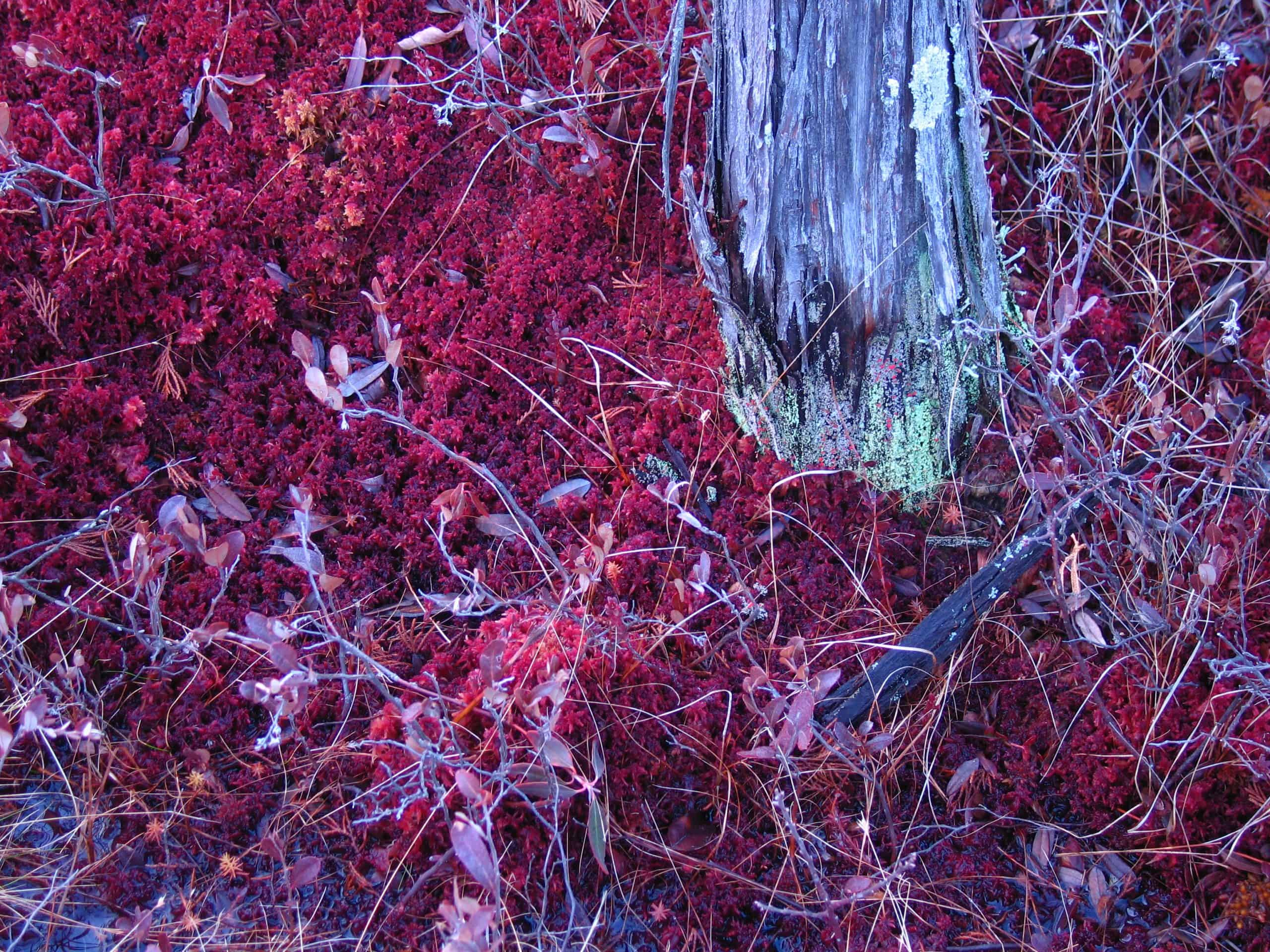 colors of the bog