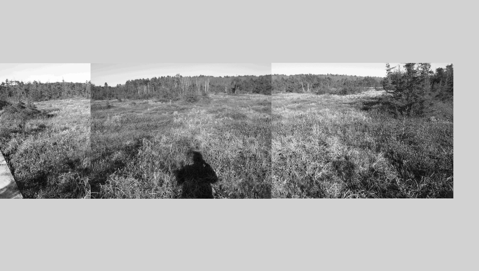 open field grass