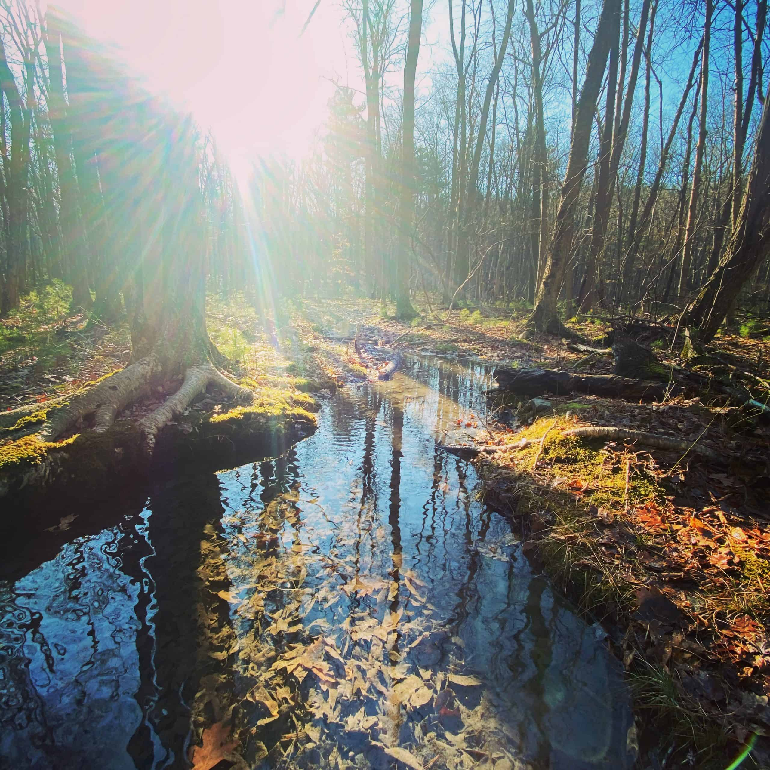 great cedar swamp