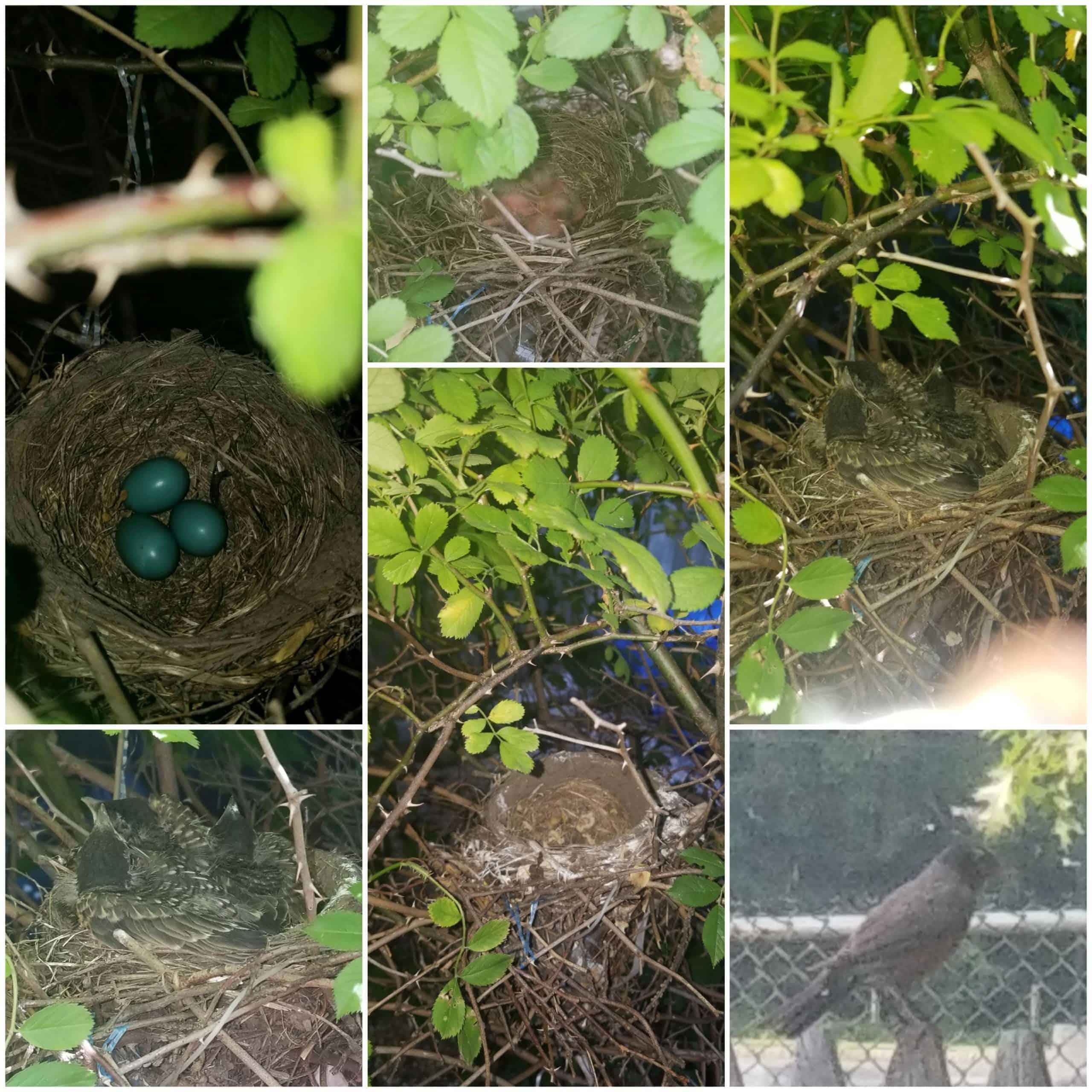 the empty nest chronicle