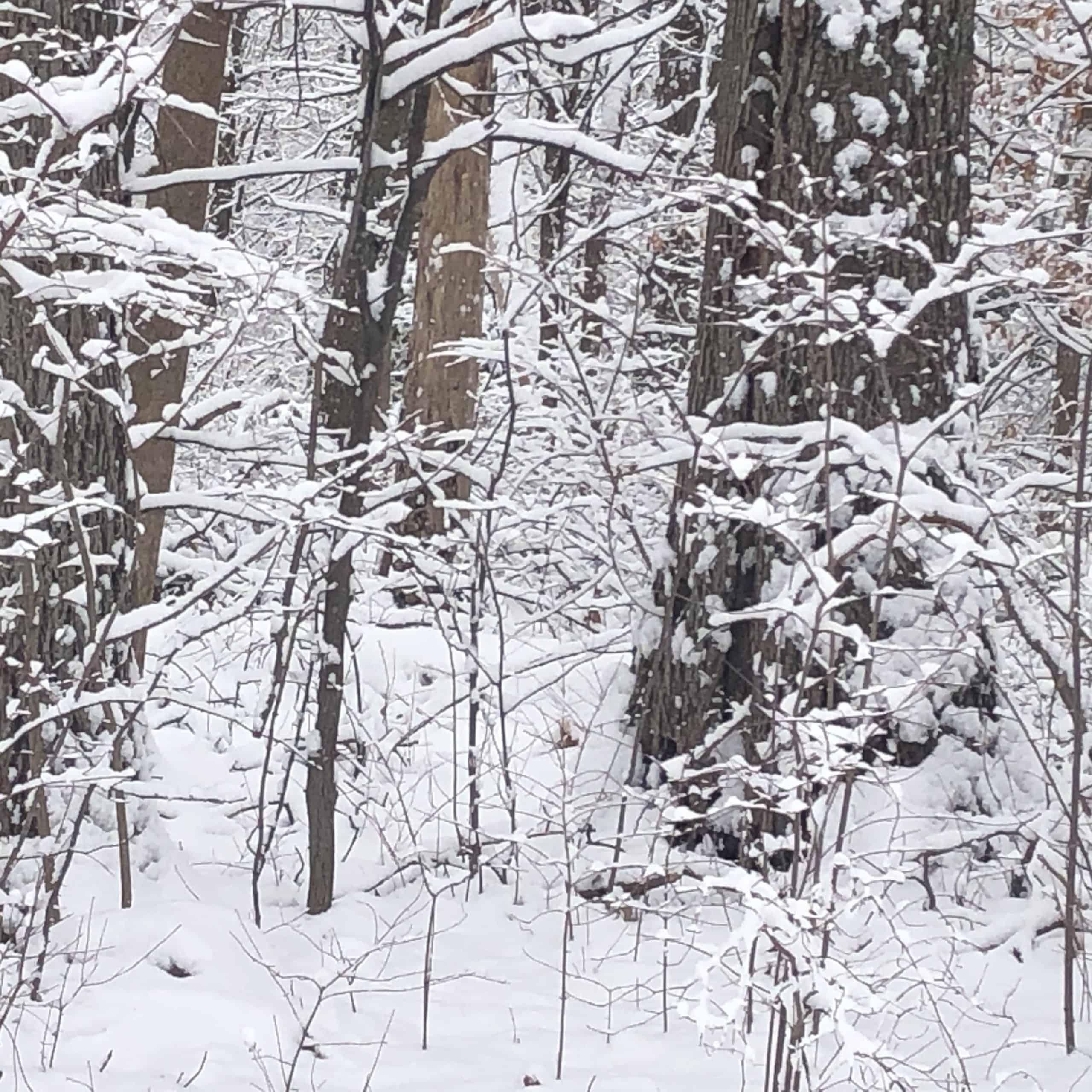 covid winter