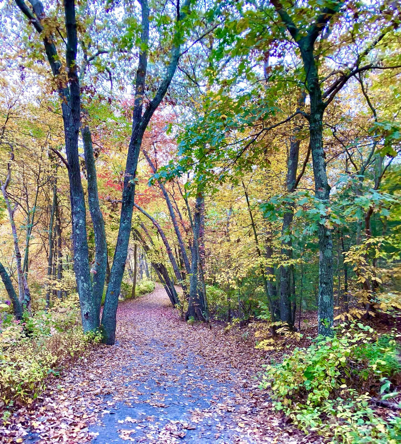 autumn walk around houghton s pond