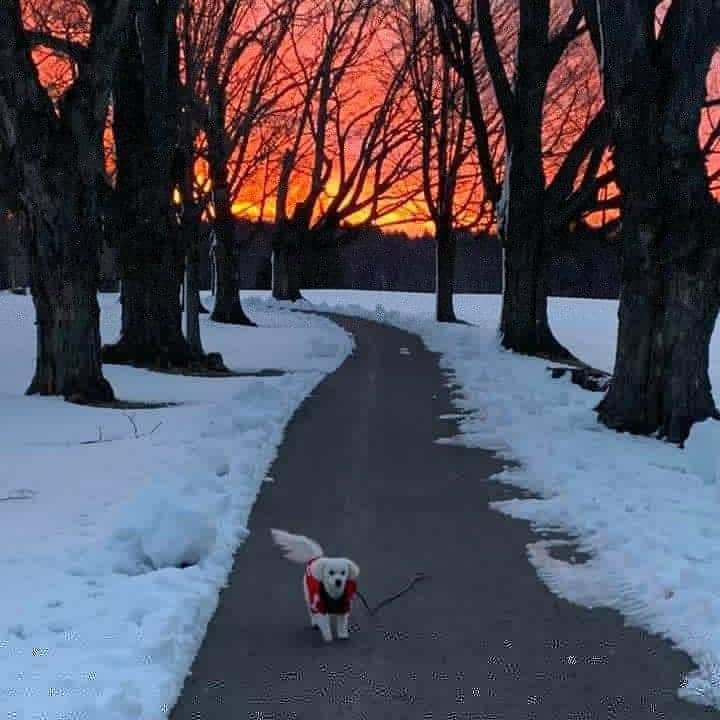 sunrise with austin powers