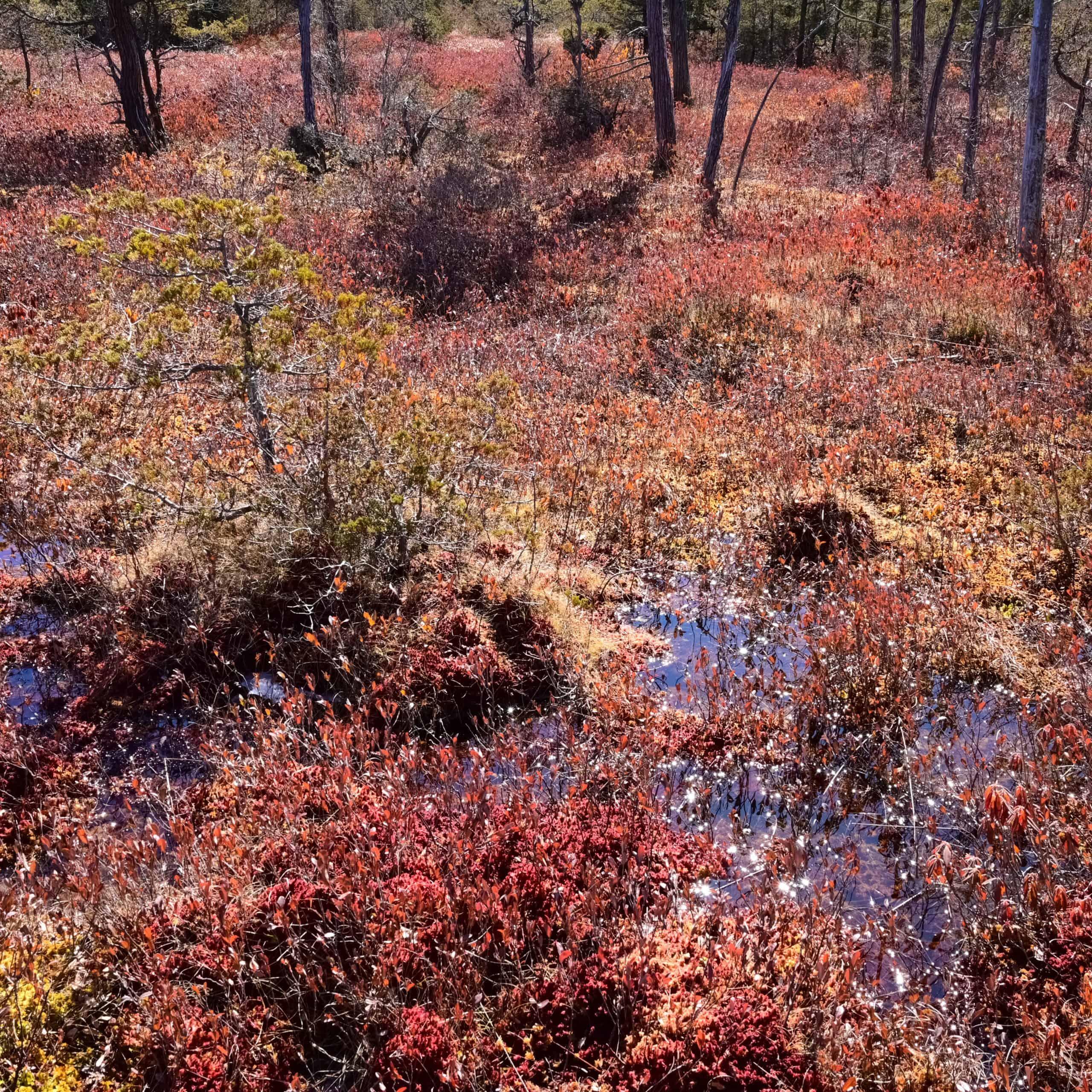 bog colors