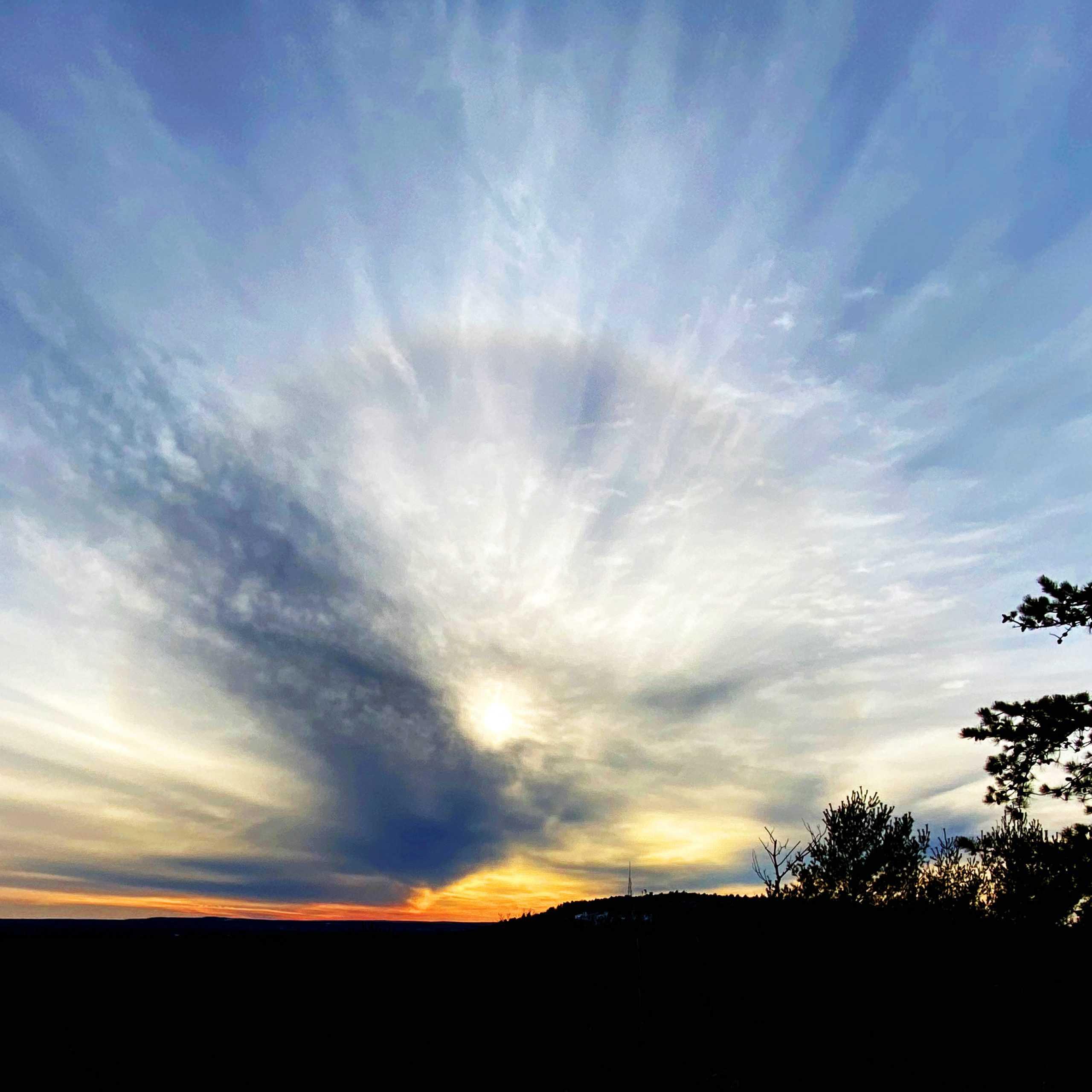 cloud bird at sunset