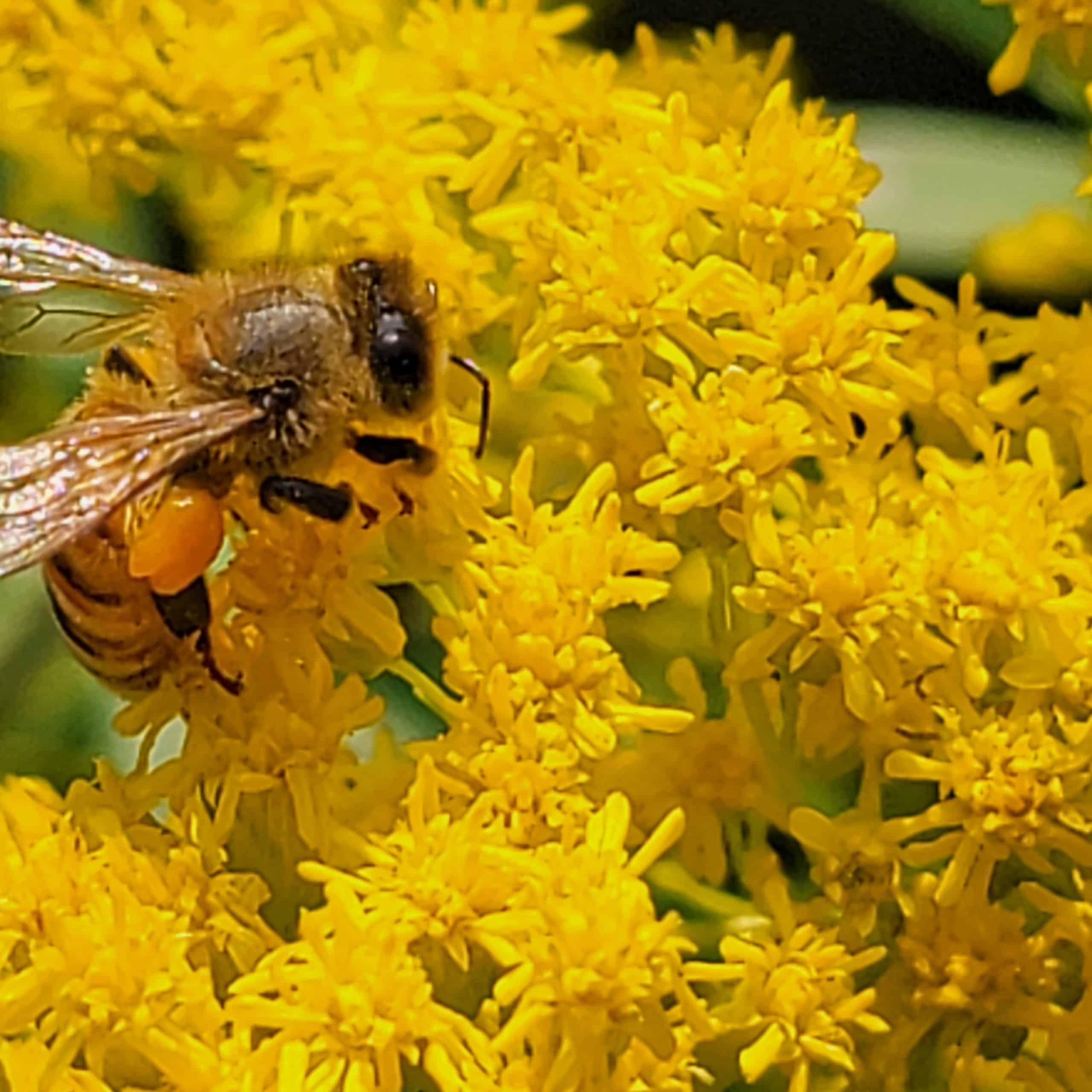 believe in pollen
