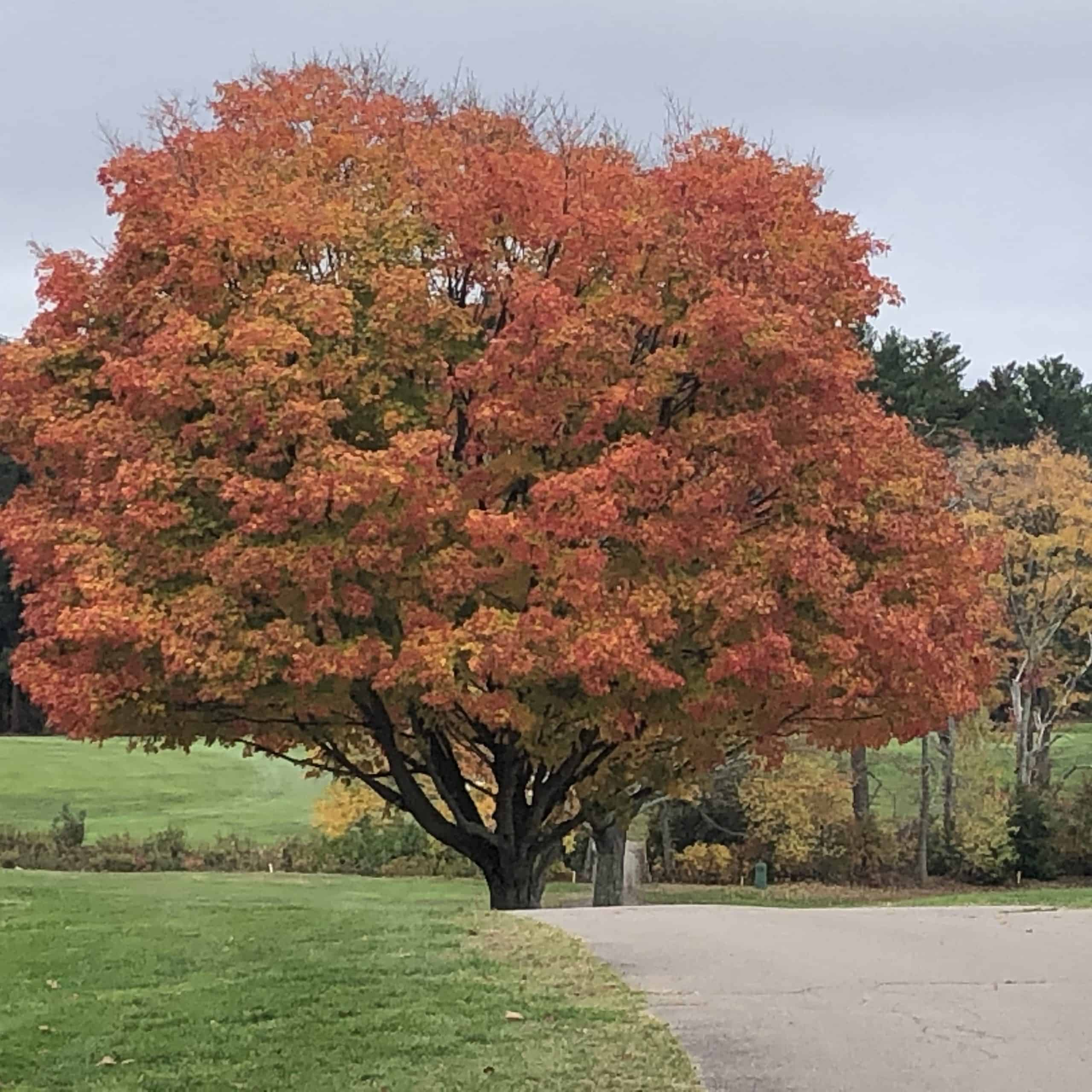 fall at ponkapoag
