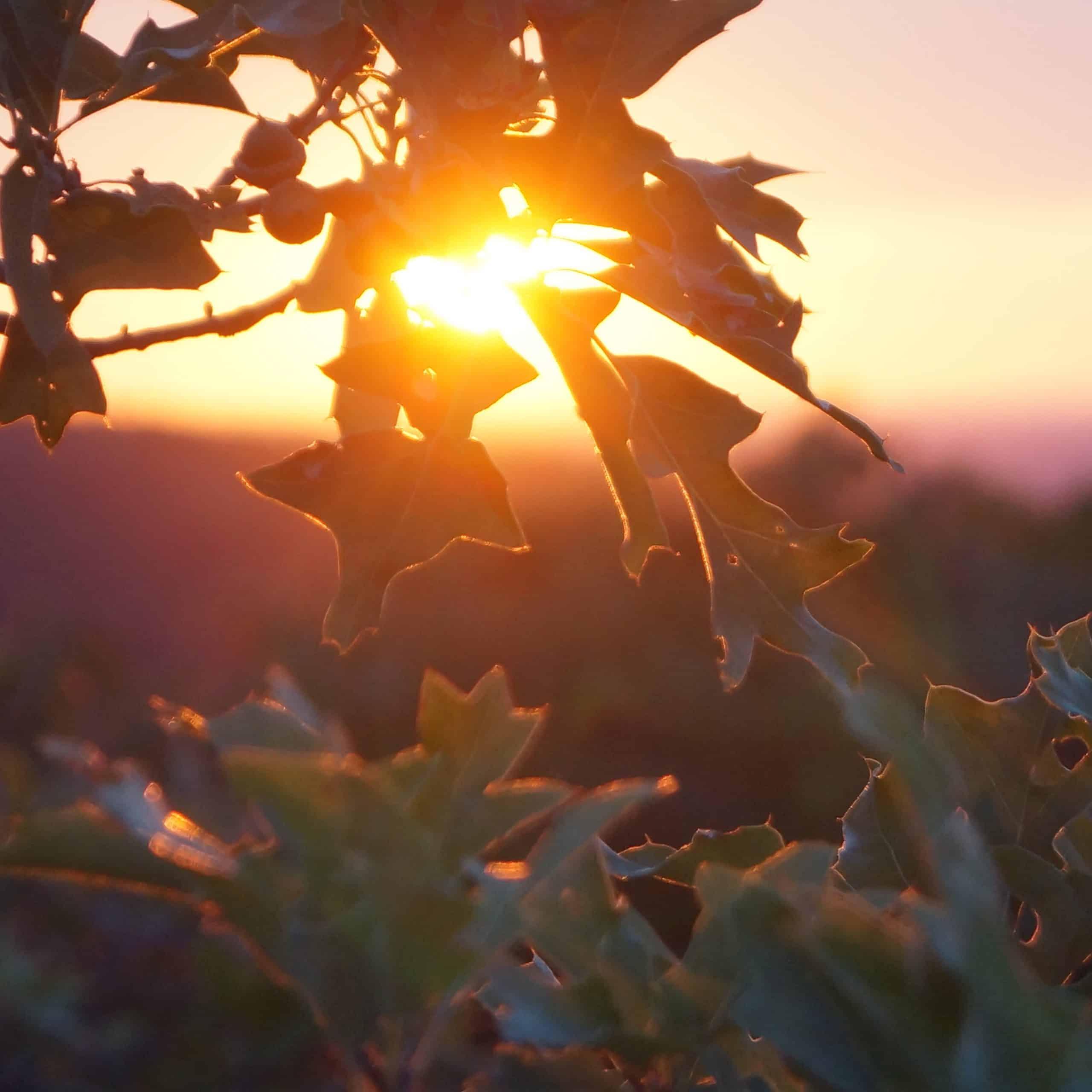 buck hill sunset